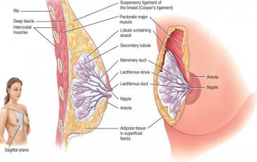 Patología benigna y maligna de mama