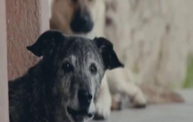 (Video) No descartan utilizar la eutanasia para disminuir  perros callejeros en la ciudad de Loja.