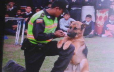(Video) Impartirán capacitación gratuita a la ciudadanía en adiestramiento de mascotas.