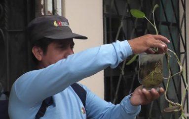 (Video) Brigada de control vectorial insiste en colaboración de ciudadanos para acciones de control.