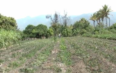 (Video) Agricultores preocupados por poco caudal en ríos, y quebradas secas