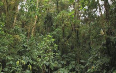 (Video) MAE, se pone al día con el pago de incentivos económicos a beneficiarios del programa Socio Bosque.