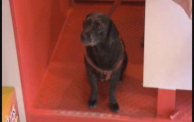 (Video) Este sábado 8 de abril sexta campaña de adopción canina en el parque lineal La Tebaida.