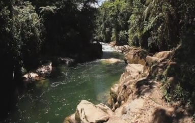 (Video) Con varias actividades se celebra el Día Mundial del Medio Ambiente