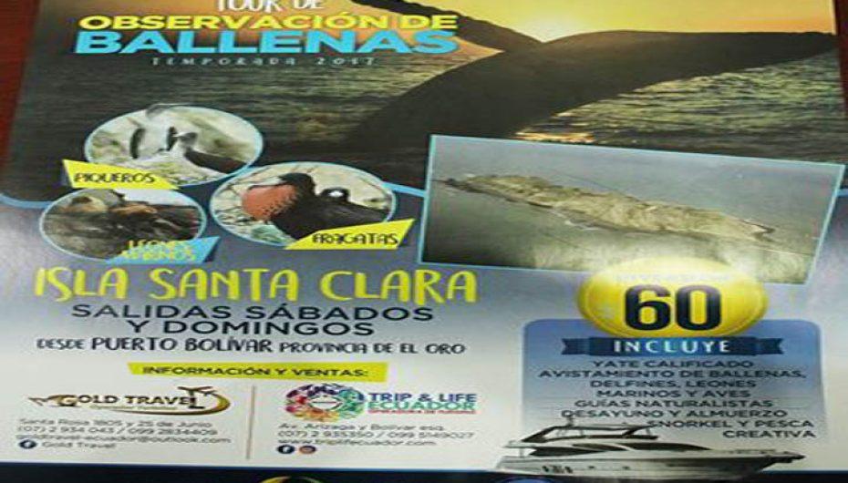 (Video) En Loja, se realizó lanzamiento de la II temporada de avistamiento de ballenas en la isla Santa Clara  en la provincia de El Oro.