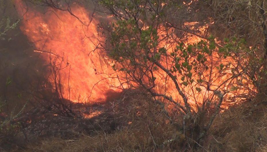 (Video) Aproximadamente 10 hectáreas de vegetación fueron consumidas por incendio forestal en Loja.