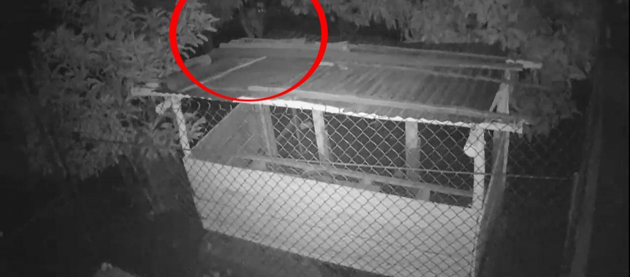 Cámaras de seguridad graban a sujeto delinquiendo en una vivienda de San José