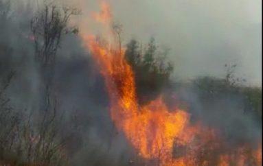(Vídeo) Incendio forestal arrasó 50 hectáreas de vegetación en la Parroquia de el Cisne.