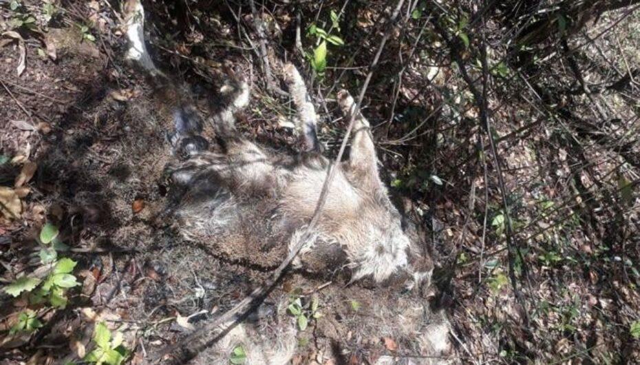 Alarma en habitantes de El Tambo por masiva muerte de perros